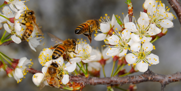 bees-and-flowers.jpg