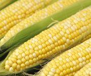 corn_a21727