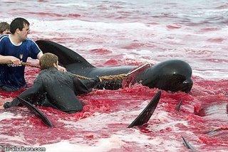 define slaughter4