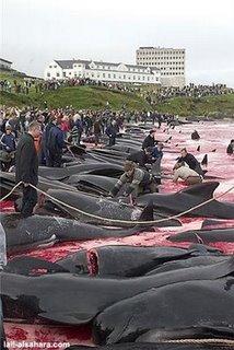 define slaughter6