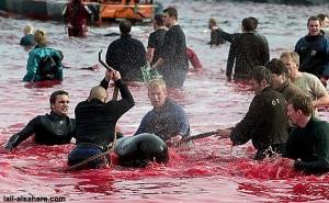 dolphin slaughterdk101