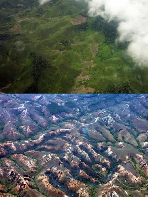 Deforestation before and after | The Natural Eye Project