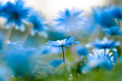 Many-Flowers-beautiful-nature-22639519-1240-827-1024x682
